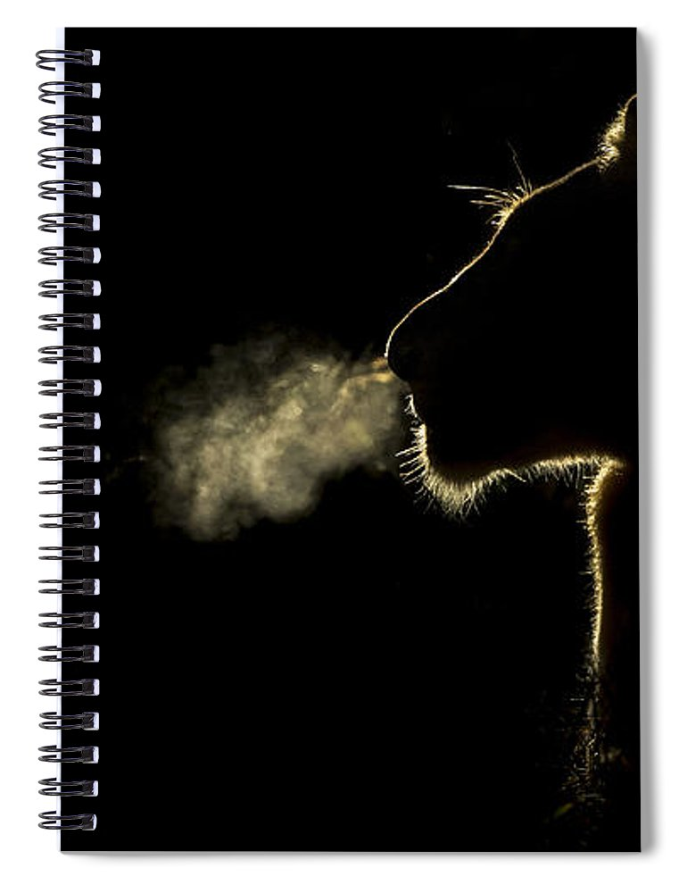 Nis Spiral Notebook featuring the photograph African Lioness Breath Sabi Sands South by Brendon Cremer