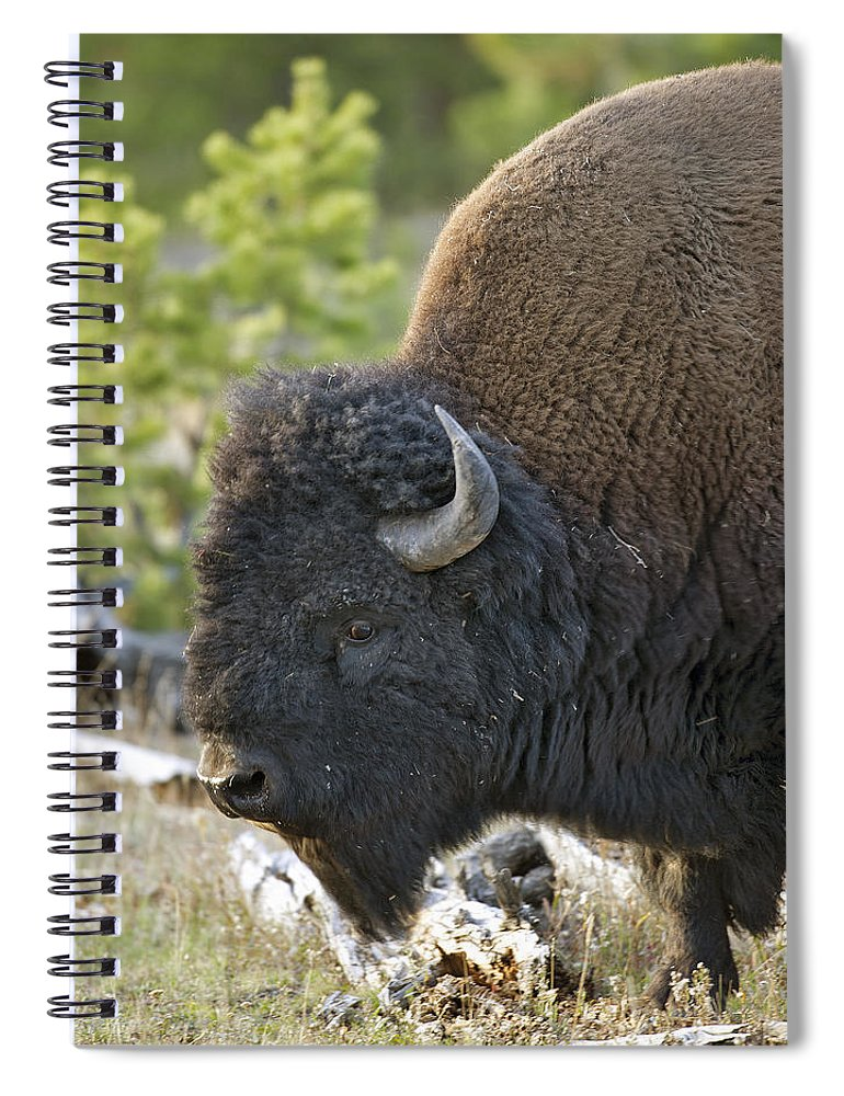 American Spiral Notebook featuring the photograph American Bison by Gary Langley