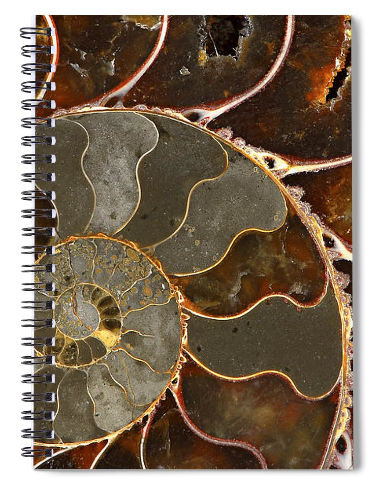 Shell Spiral Notebook featuring the photograph Ammolite by Elena Elisseeva
