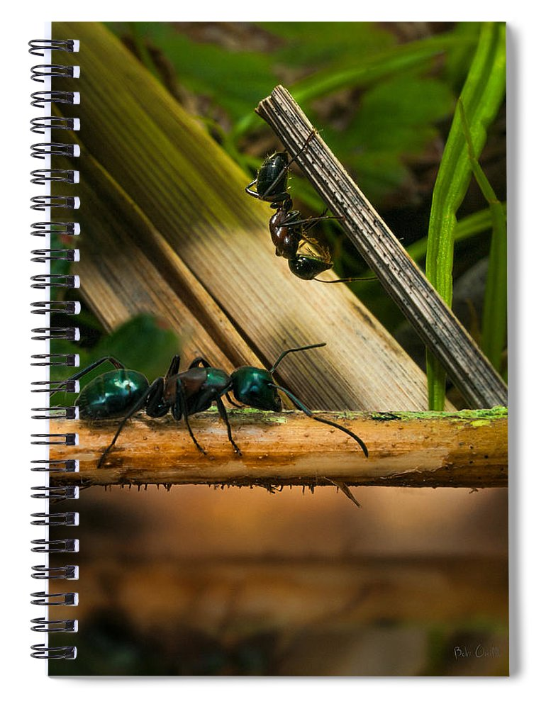 Ant Spiral Notebook featuring the photograph Ants Adventure 2 by Bob Orsillo