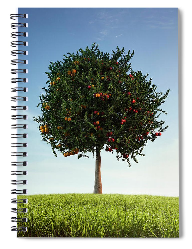 Tranquility Spiral Notebook featuring the photograph Apples And Oranges Growing On Tree by Colin Anderson Productions Pty Ltd