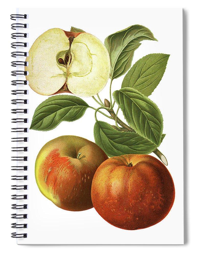 Art Spiral Notebook featuring the digital art Apples by Ivan-96