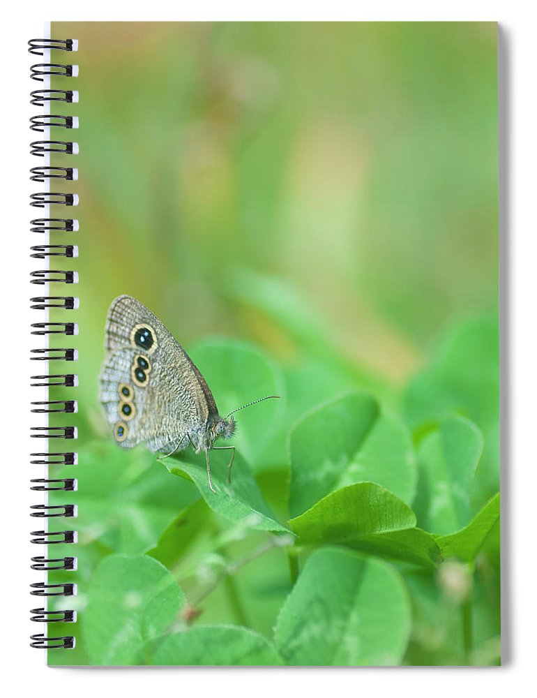 Insect Spiral Notebook featuring the photograph Argus Rings Butterfly by Polotan