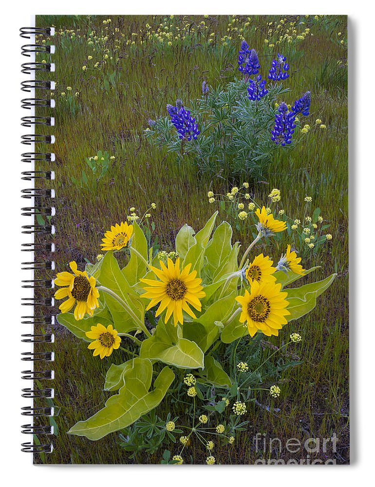Nature Spiral Notebook featuring the photograph Arrowleaf Balsamroot And Lupine by John Shaw