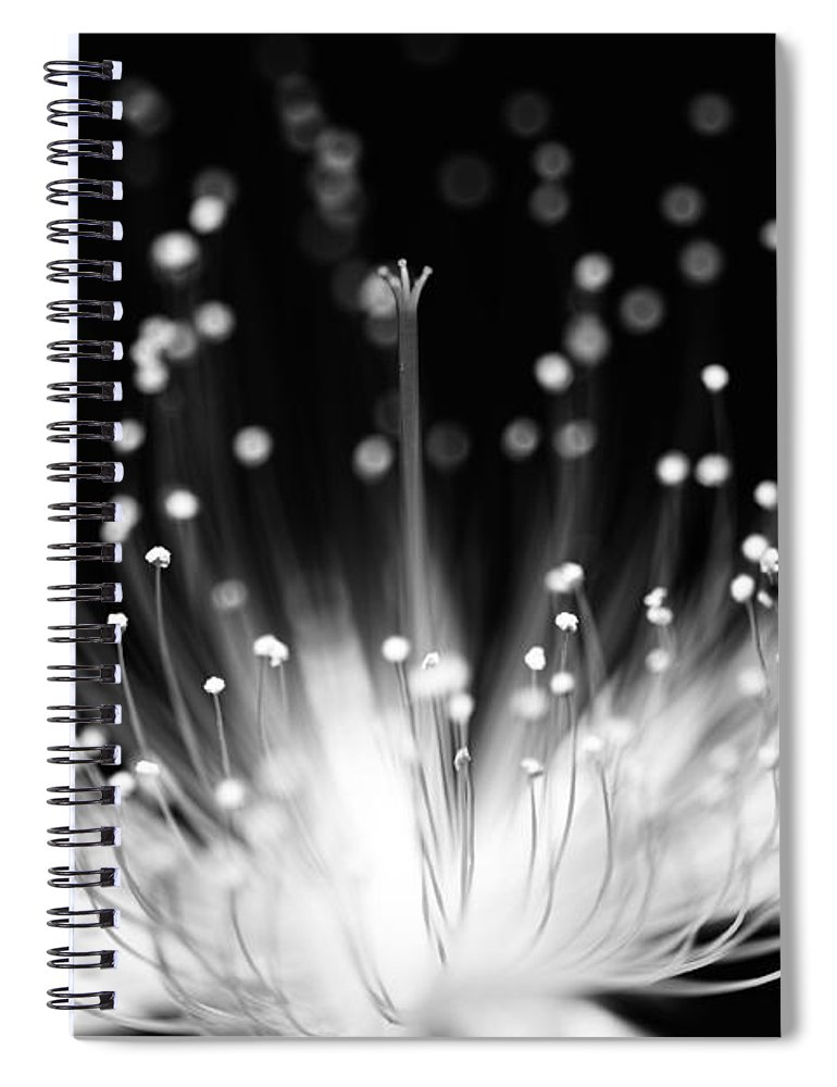 Black Background Spiral Notebook featuring the photograph As Flame by Char