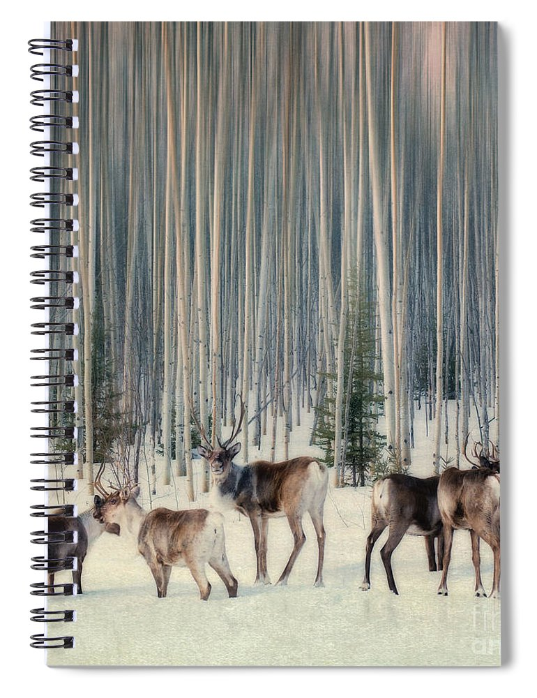 Woodland Caribou Spiral Notebook featuring the photograph Caribou And Trees by Priska Wettstein