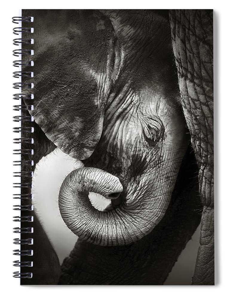 Elephant Spiral Notebook featuring the photograph Baby Elephant Seeking Comfort by Johan Swanepoel