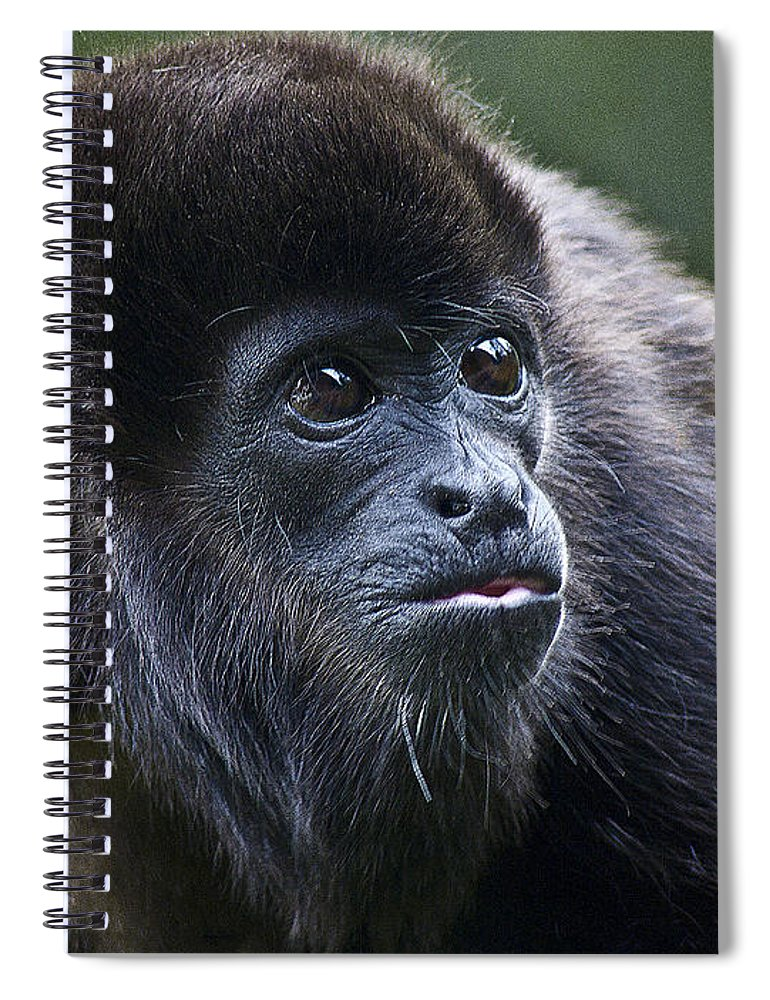 Howler Monkey Spiral Notebook featuring the photograph Baby Howler Monkey by Heiko Koehrer-Wagner