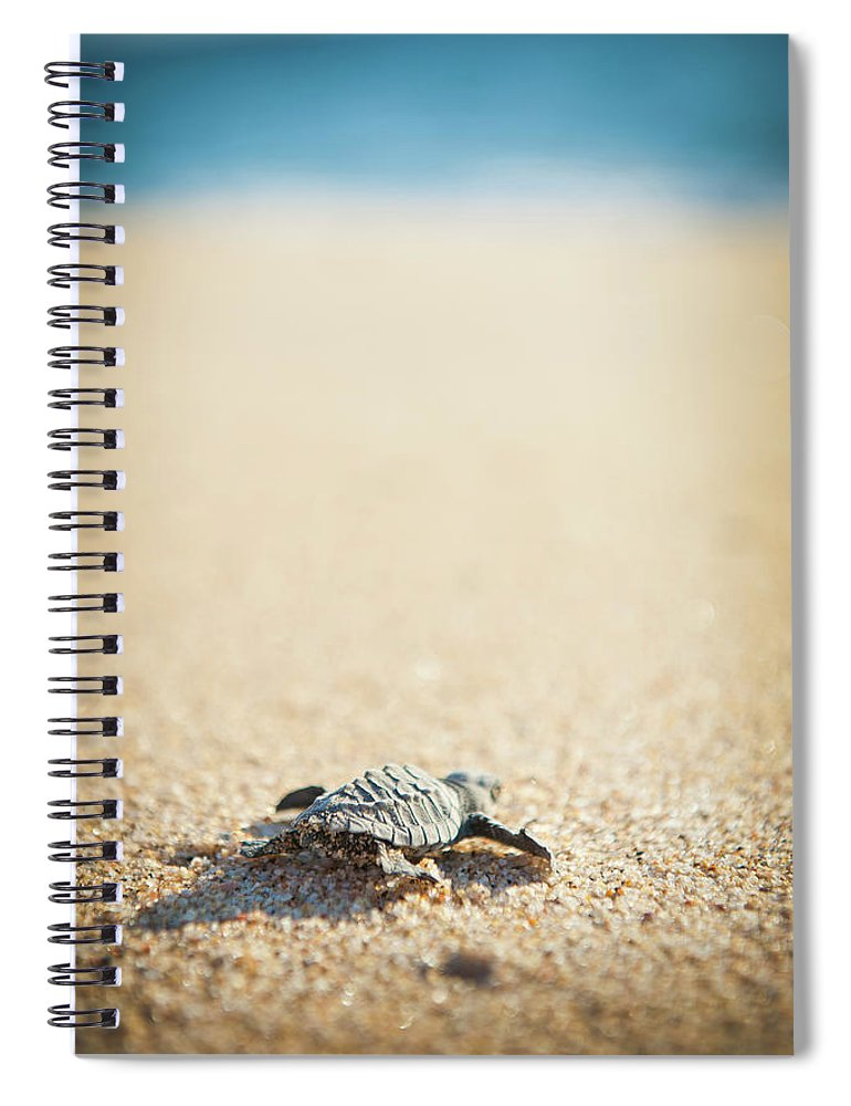 Shadow Spiral Notebook featuring the photograph Baby Pacific Green Sea Turtle Heads For by Stephen Simpson