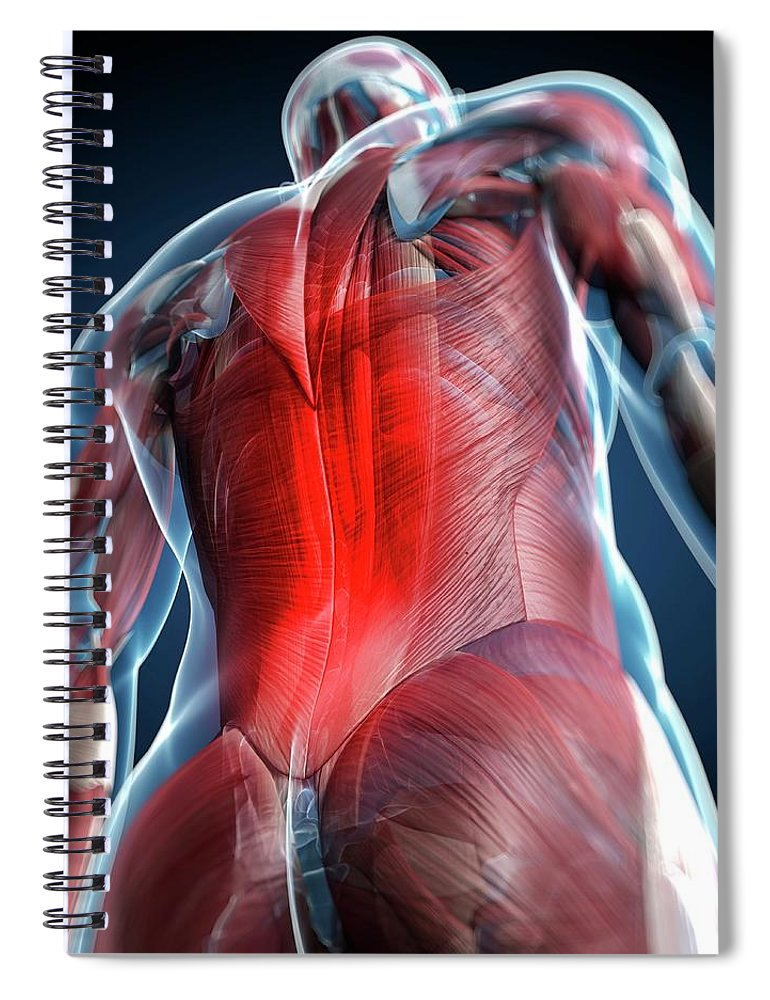 Physiology Spiral Notebook featuring the digital art Back Pain, Conceptual Artwork by Science Photo Library - Sciepro