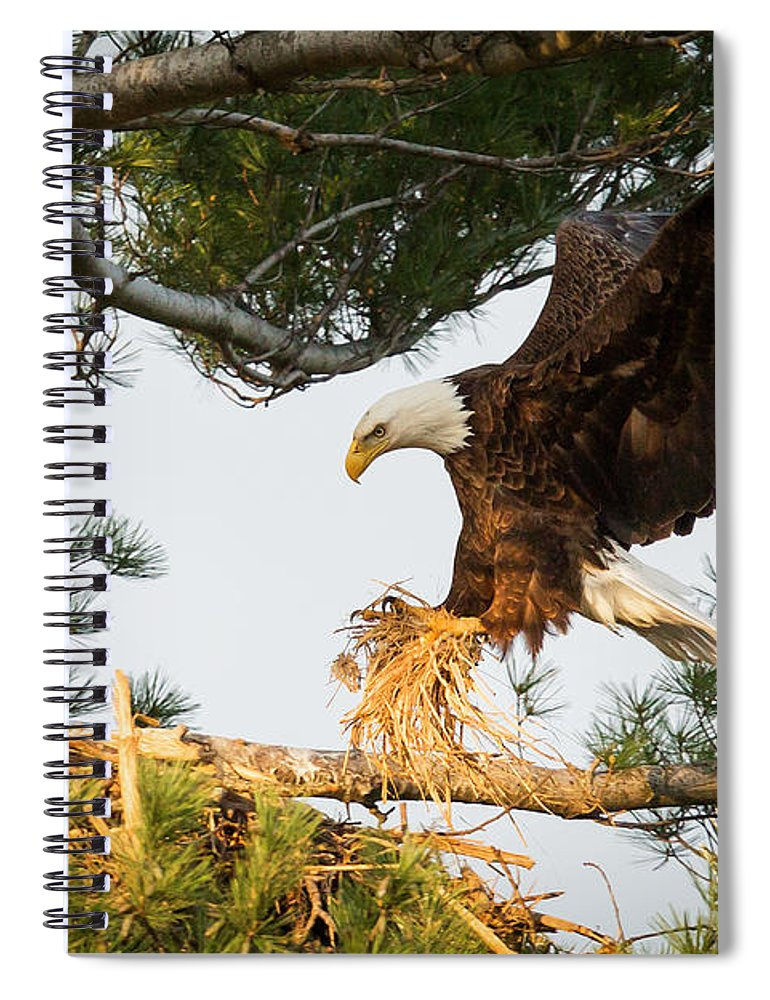 Bald Eagle Spiral Notebook featuring the photograph Bald Eagle Building Nest by Everet Regal