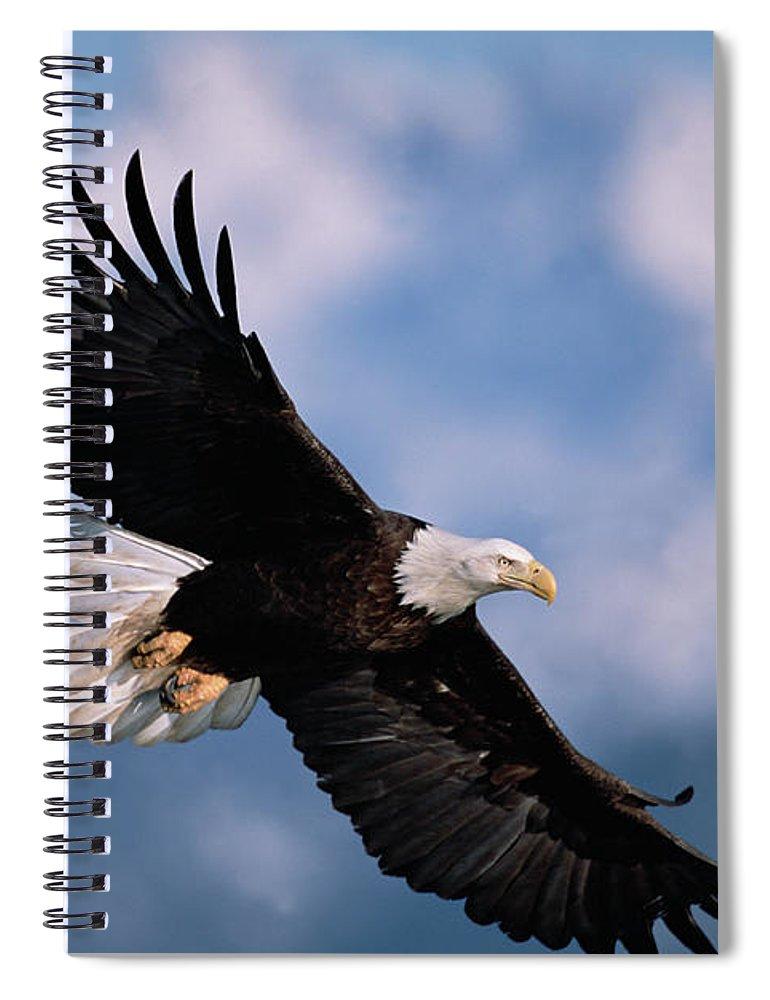 00343849 Spiral Notebook featuring the photograph Bald Eagle Flying Kachemak Bay by Yva Momatiuk John Eastcott