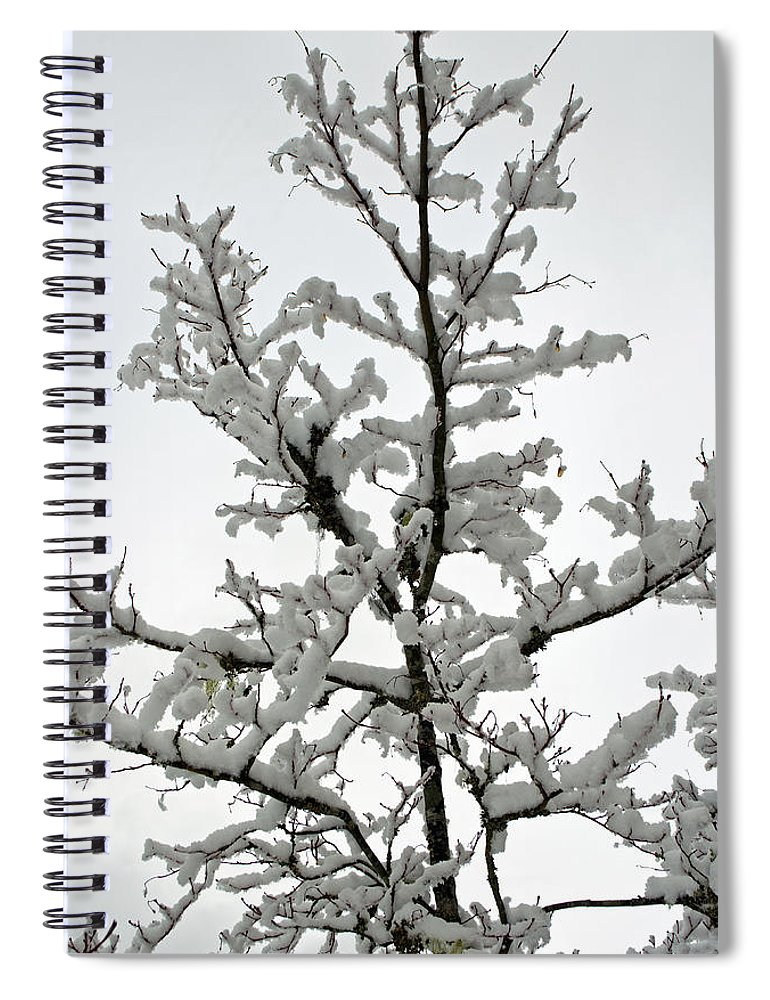 Bare Branches Spiral Notebook featuring the photograph Bare Branches With Snow by Tikvah's Hope