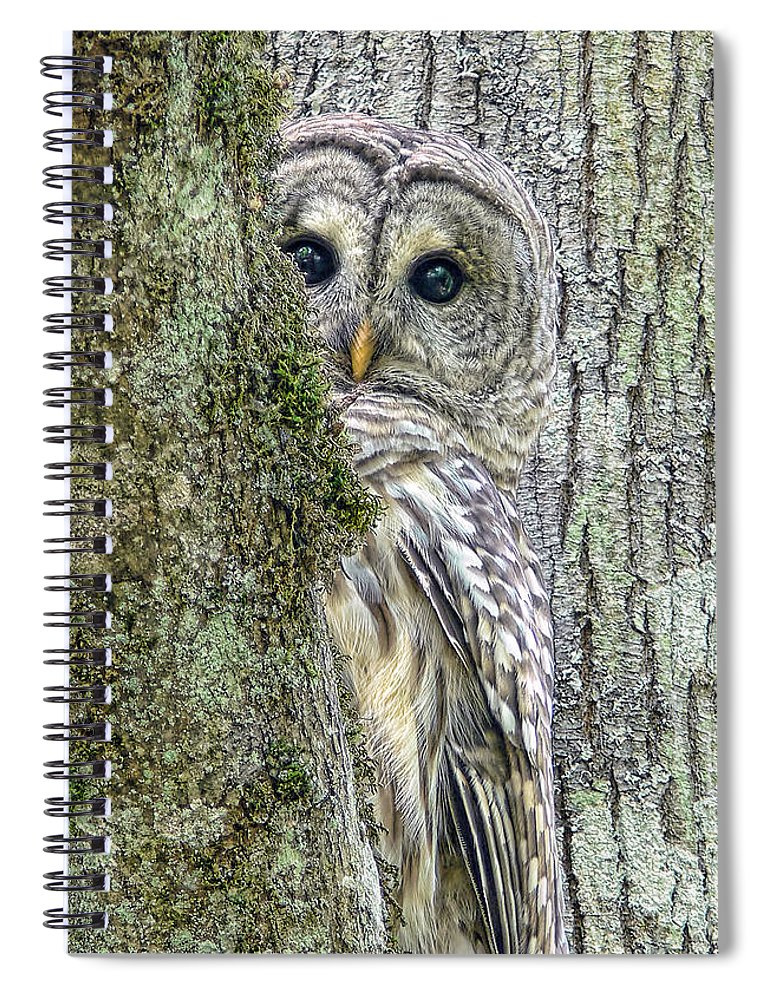 Owl Spiral Notebook featuring the photograph Barred Owl Peek A Boo by Jennie Marie Schell