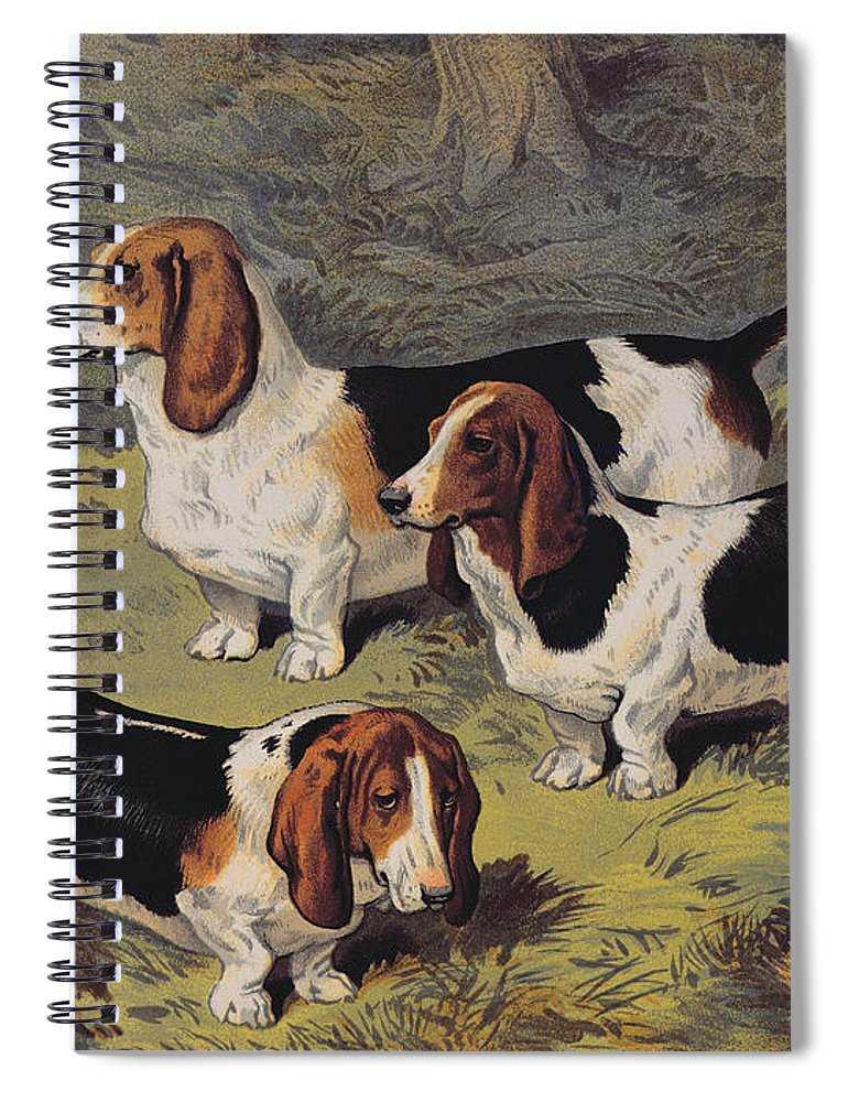 Dogs Spiral Notebook featuring the painting Basset Hounds by English School