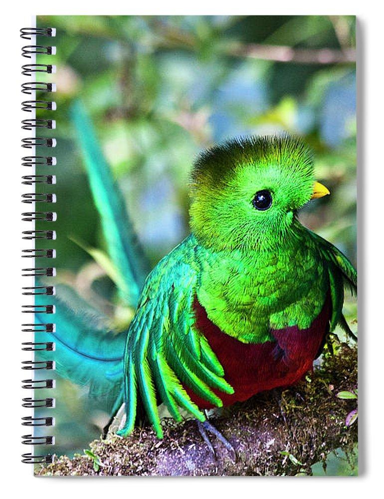 Bird Spiral Notebook featuring the photograph Beautiful Quetzal 5 by Heiko Koehrer-Wagner