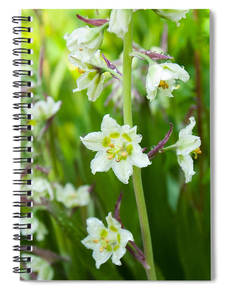 Death Camas Spiral Notebook featuring the photograph Beauty Of The Death Camas Flower by Cascade Colors