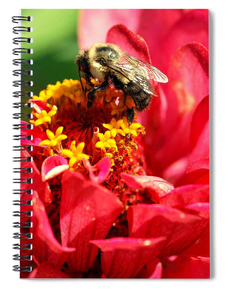 Zinnia Spiral Notebook featuring the photograph Bee On A Zinnia Flower by Optical Playground By MP Ray