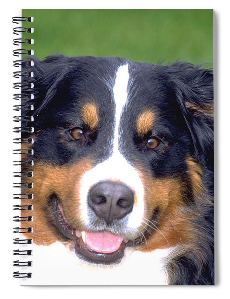 Horizontal Spiral Notebook featuring the photograph Bernese Mountain Dog by William H. Mullins
