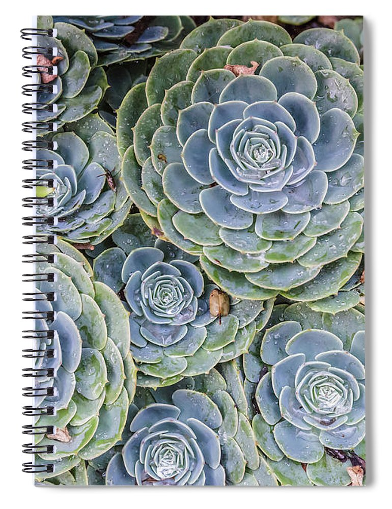 Natural Pattern Spiral Notebook featuring the photograph Best Of The Month by David Madison