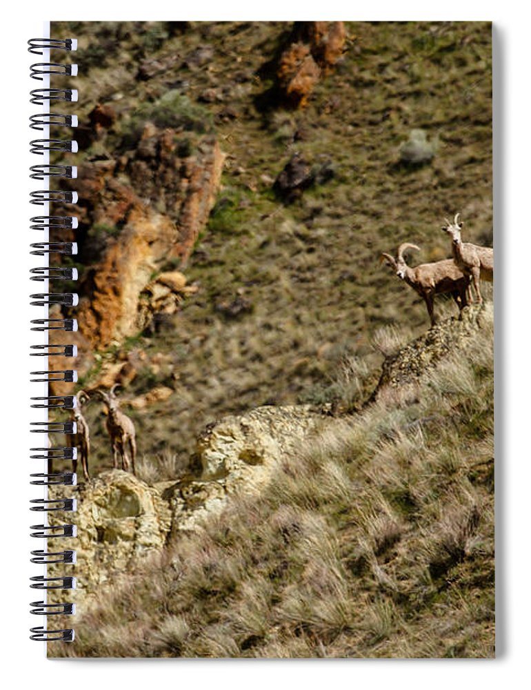Sheep Spiral Notebook featuring the photograph Bighorn Sheep by Robert Bales