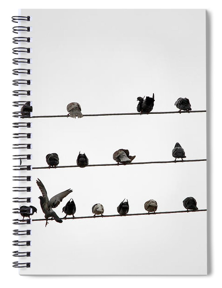 Amazon Rainforest Spiral Notebook featuring the photograph Birds Pattern by Ricardo Lima