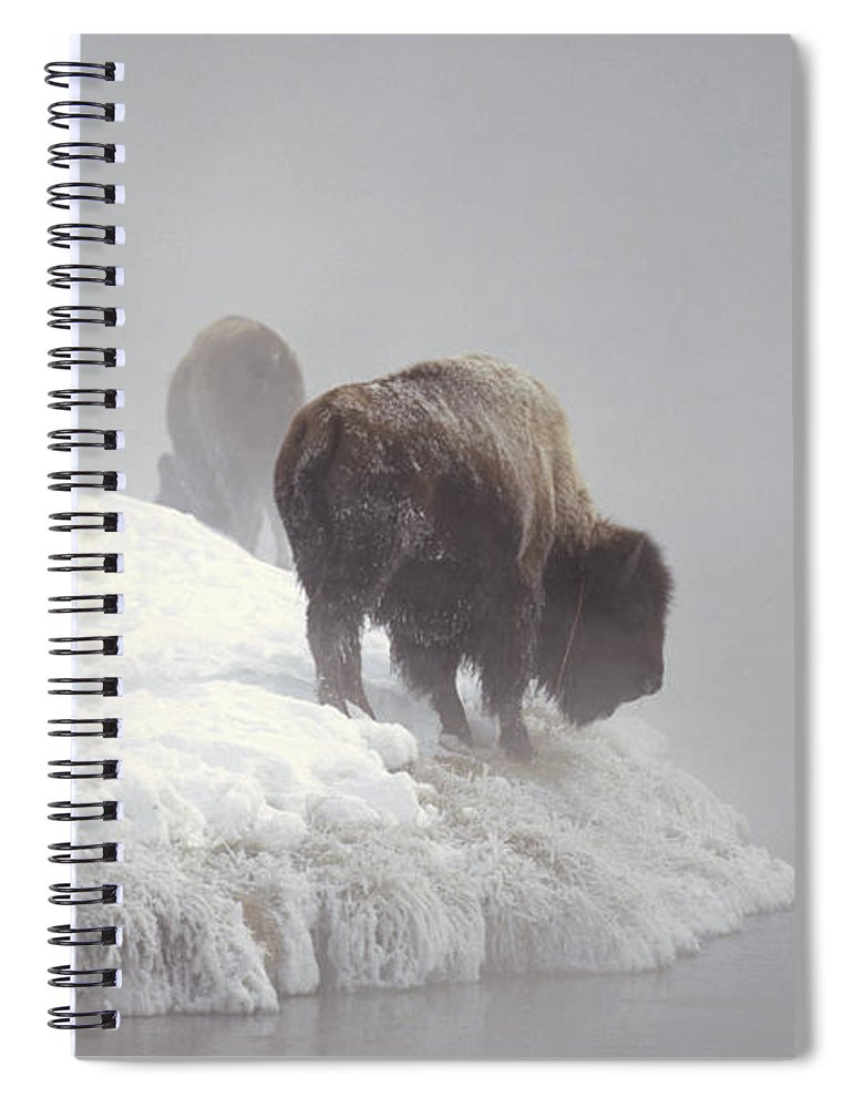 Feb0514 Spiral Notebook featuring the photograph Bison Along Snowy Riverbank Yellowstone by Konrad Wothe