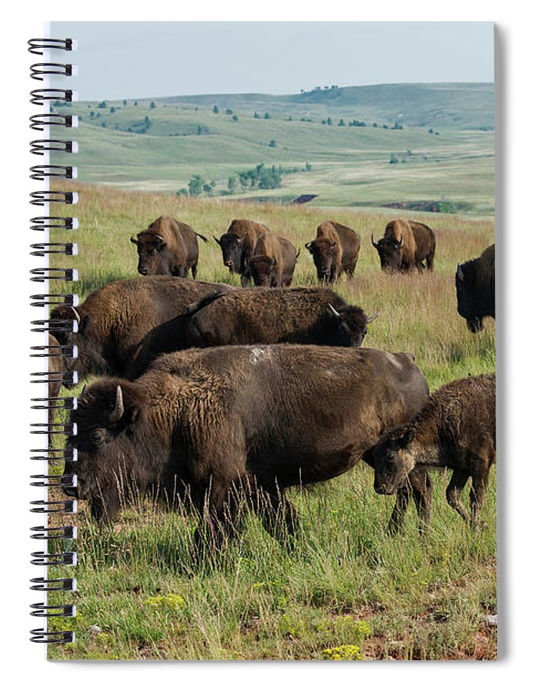 Grass Spiral Notebook featuring the photograph Bison Buffalo In Wind Cave National Park by Mark Newman