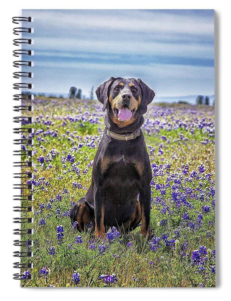 Animal Themes Spiral Notebook featuring the photograph Black And Tan Coonhound In Field Of by Sunmallia Photography