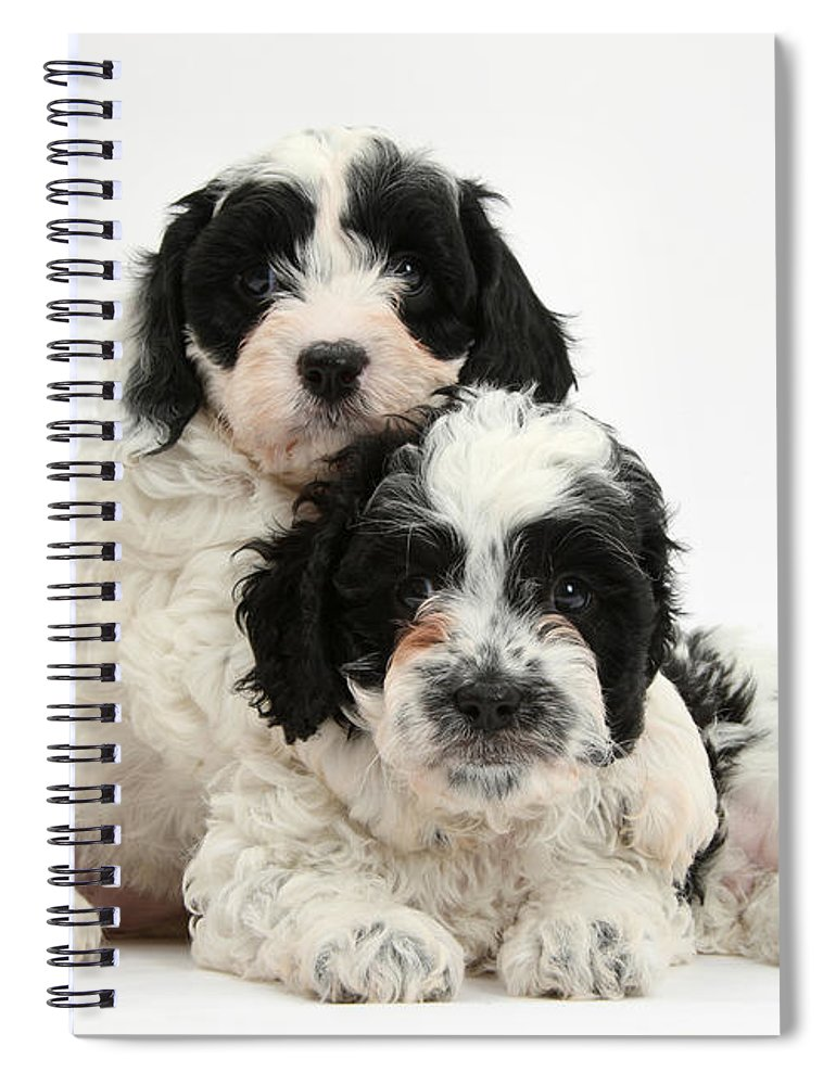 Black-and-white Cavapoo Puppies Spiral Notebook