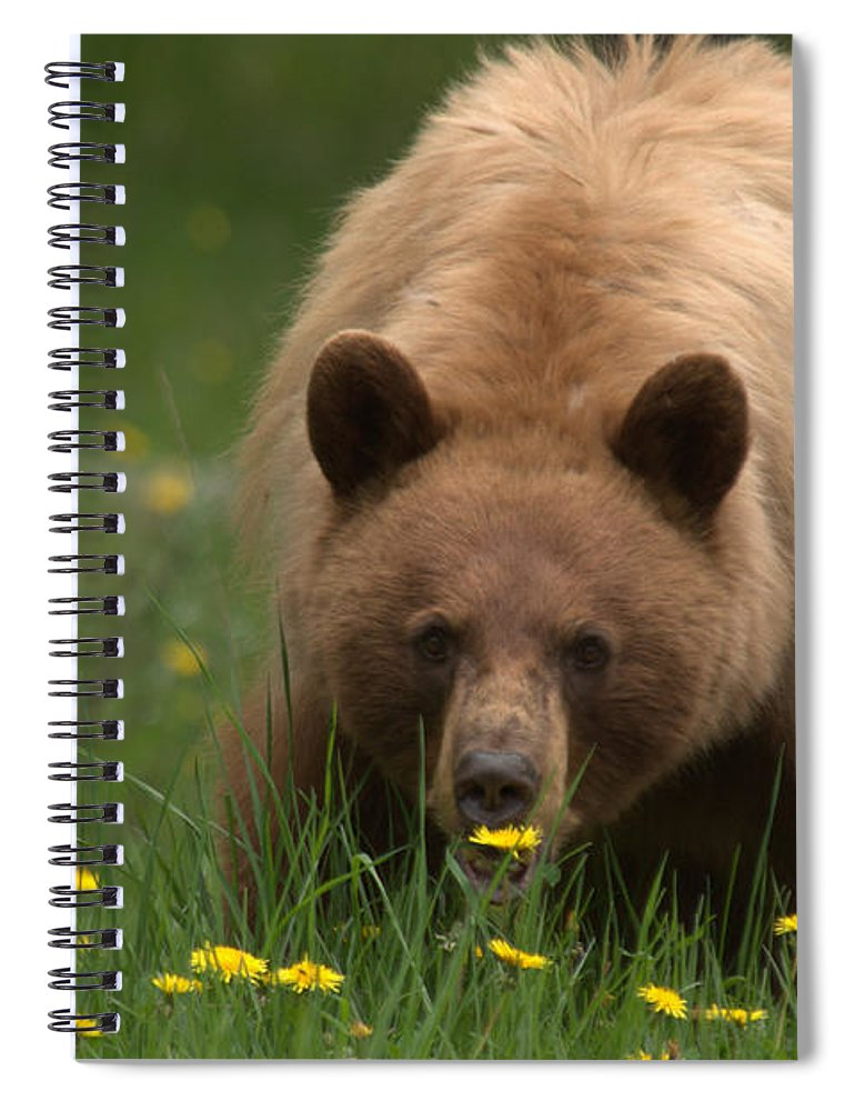 Bear Spiral Notebook featuring the photograph Black Bear by Frank Madia