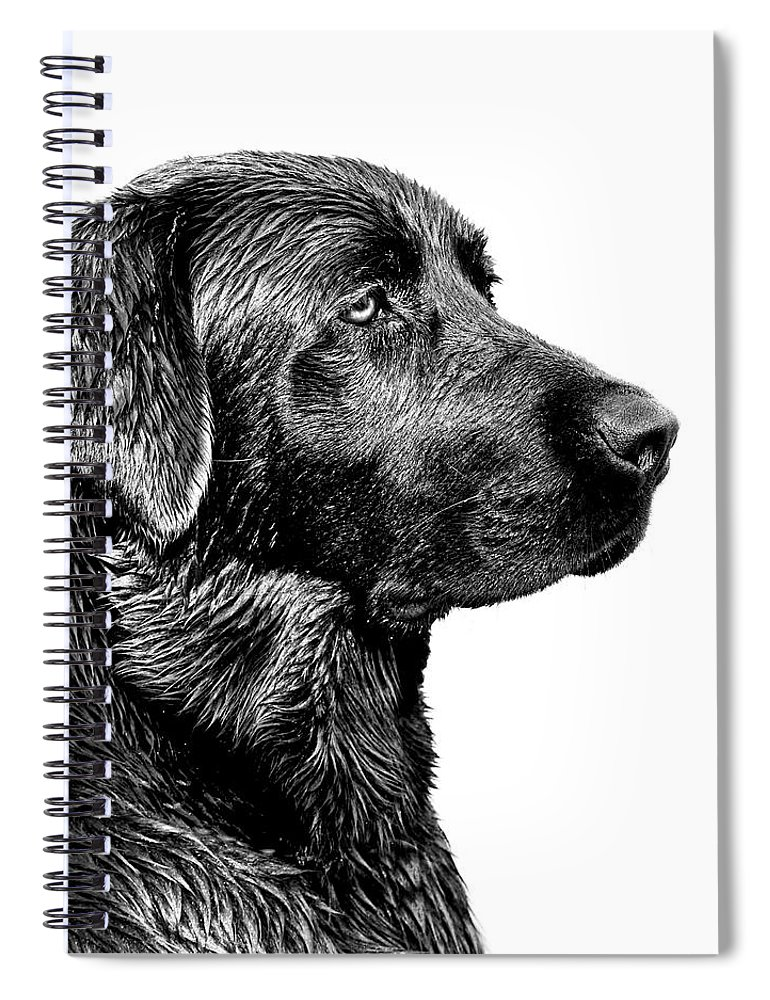 Labrador Retriever Spiral Notebook featuring the photograph Black Labrador Retriever Dog Monochrome by Jennie Marie Schell