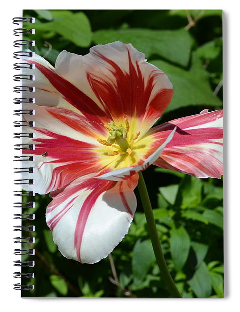 Flower Spiral Notebook featuring the photograph Bloom by Tara Potts