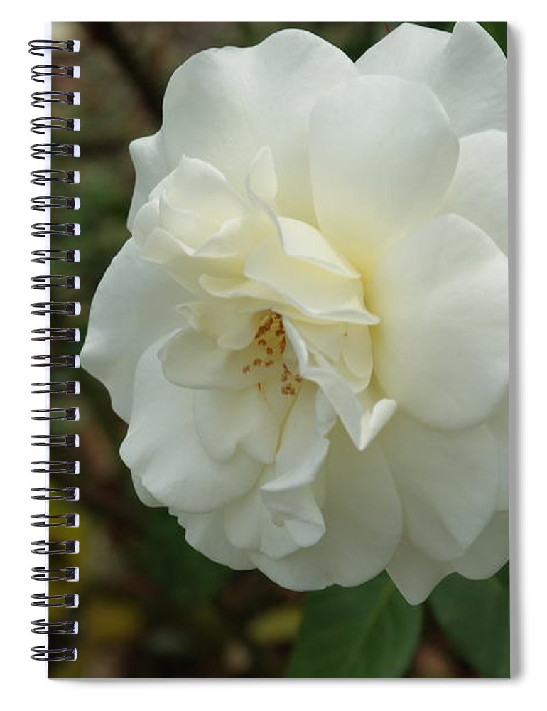 Big Spiral Notebook featuring the photograph Bountiful White Rose... by Rob Luzier
