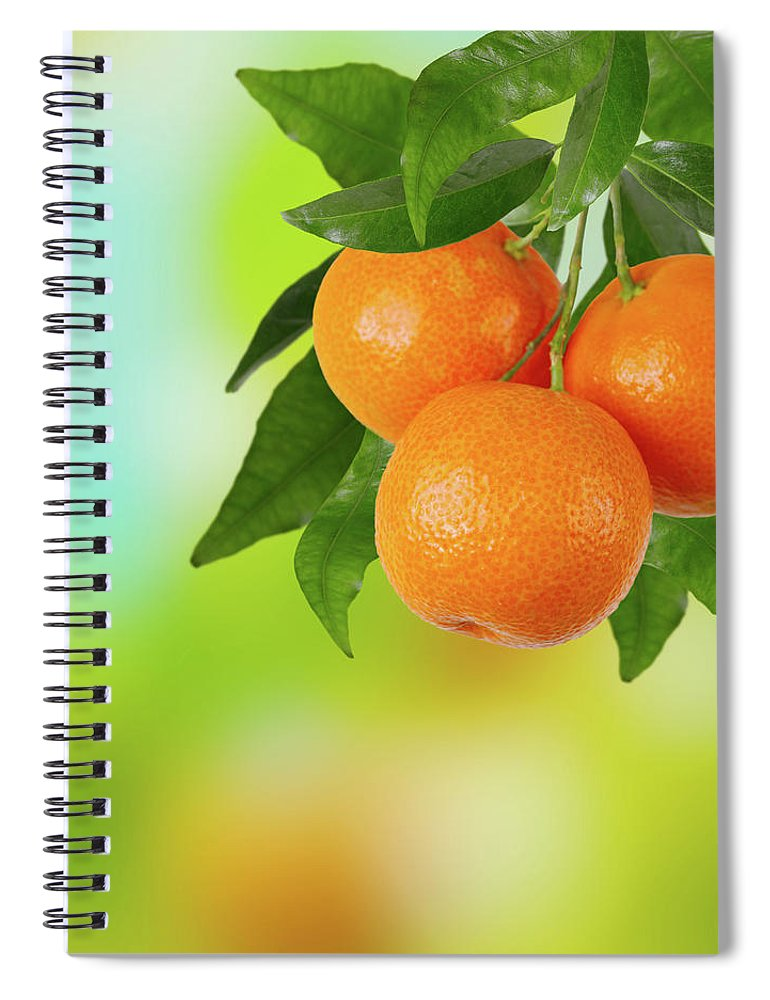 Hanging Spiral Notebook featuring the photograph Branch Of Tangerines by Sashahaltam