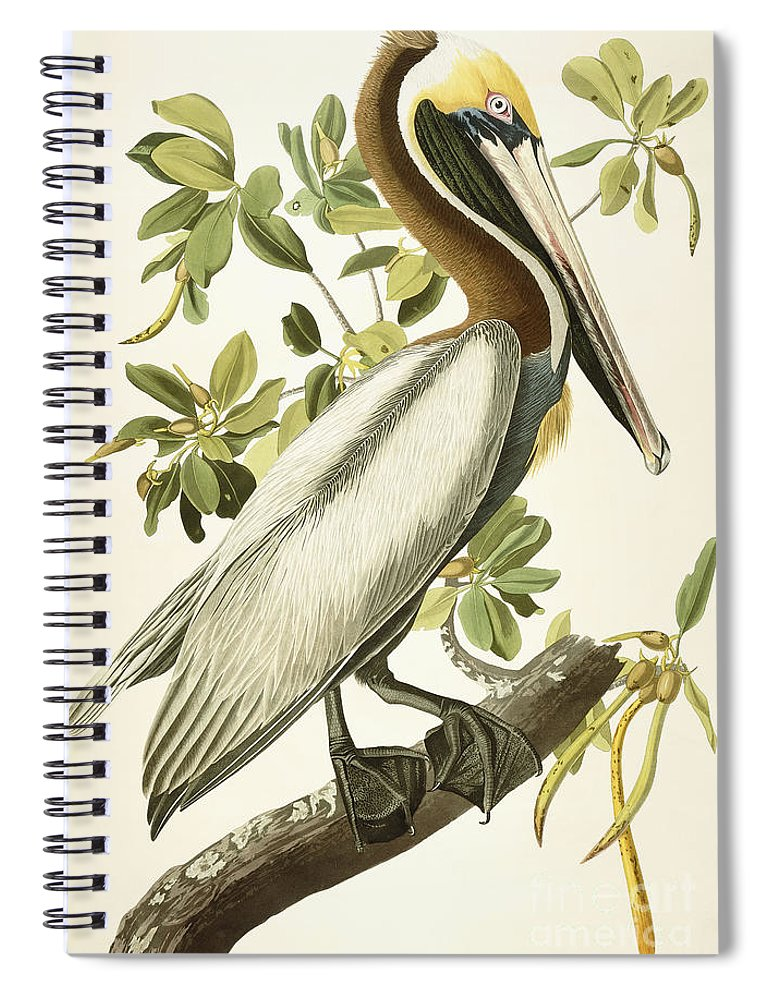 Brown Pelican Spiral Notebook featuring the painting Brown Pelican by John James Audubon