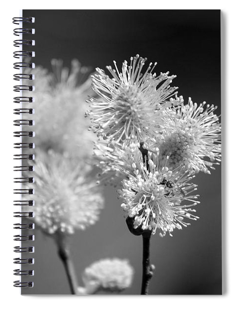 Pussy Willow Spiral Notebook featuring the photograph Burst by Lisa Kane