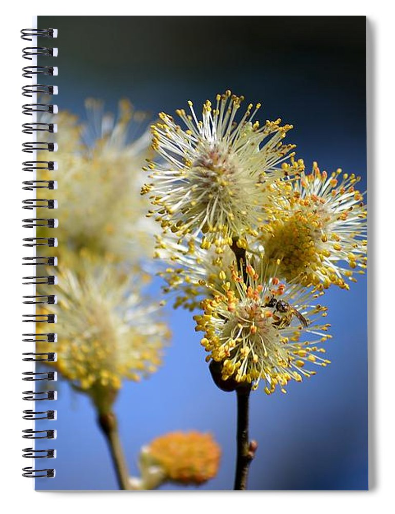 Pussy Willow Spiral Notebook featuring the photograph Bursting by Lisa Kane