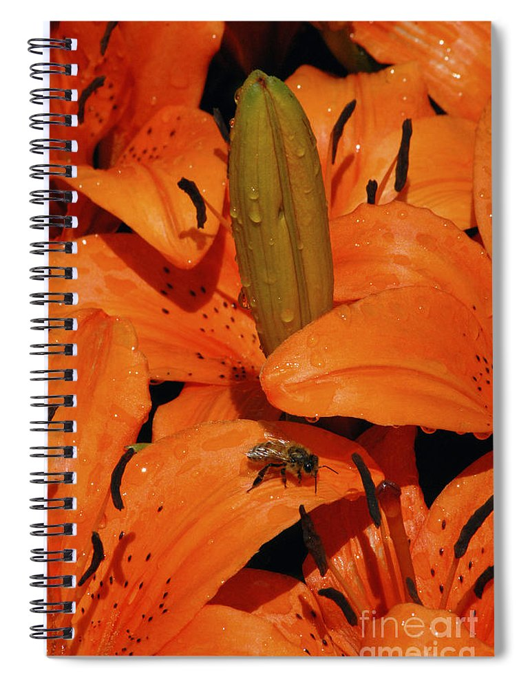 Day Lily Spiral Notebook featuring the photograph Busy Bee - 774 by Paul W Faust - Impressions of Light