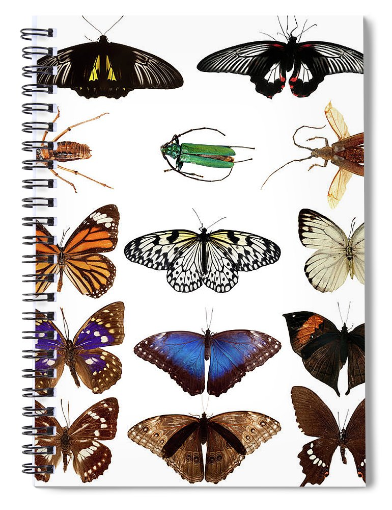 Common Blue Butterfly Spiral Notebook featuring the photograph Butterflies And Beetles by Mashabuba