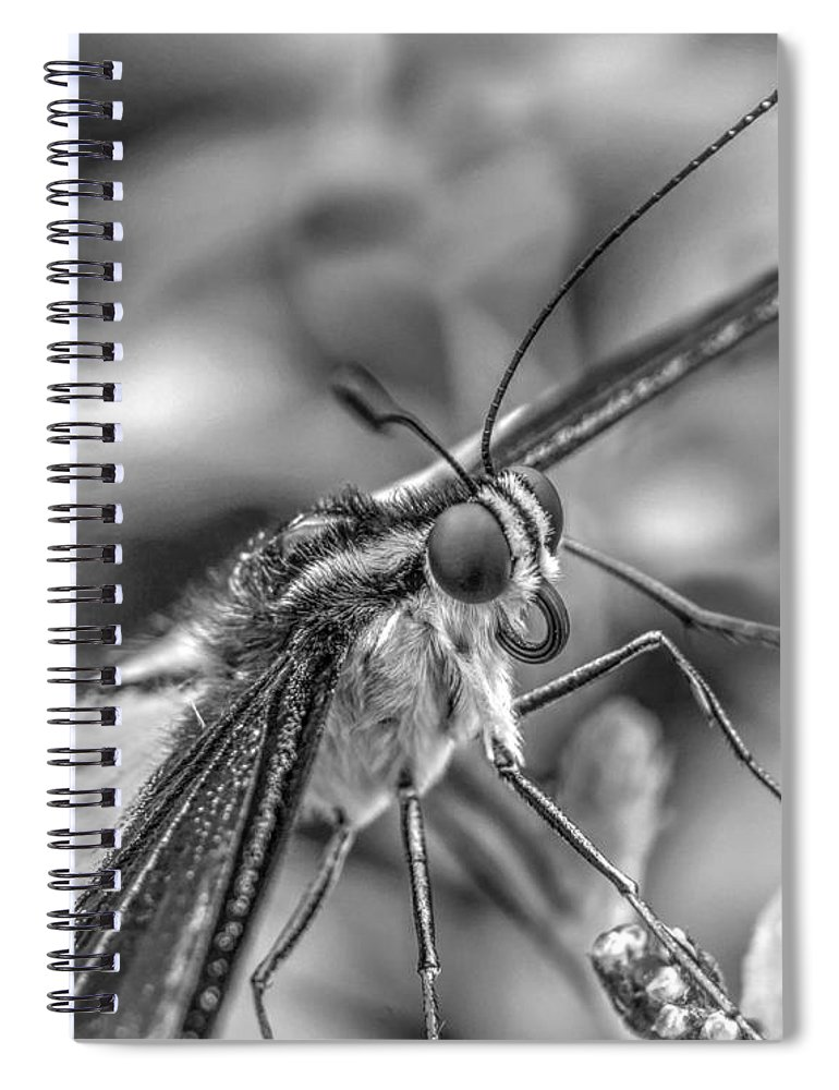 Lepidoptera Spiral Notebook featuring the photograph Butterfly by MSVRVisual Rawshutterbug