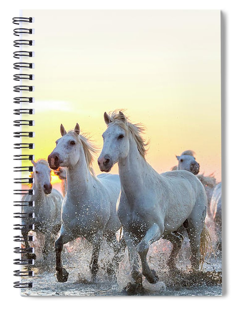 Animal Themes Spiral Notebook featuring the photograph Camargue White Horses Running In Water by Peter Adams