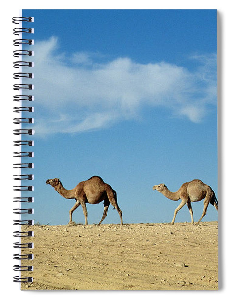 Camels; Animal; Desert; Arid Spiral Notebook featuring the photograph Camel Train by Anonymous