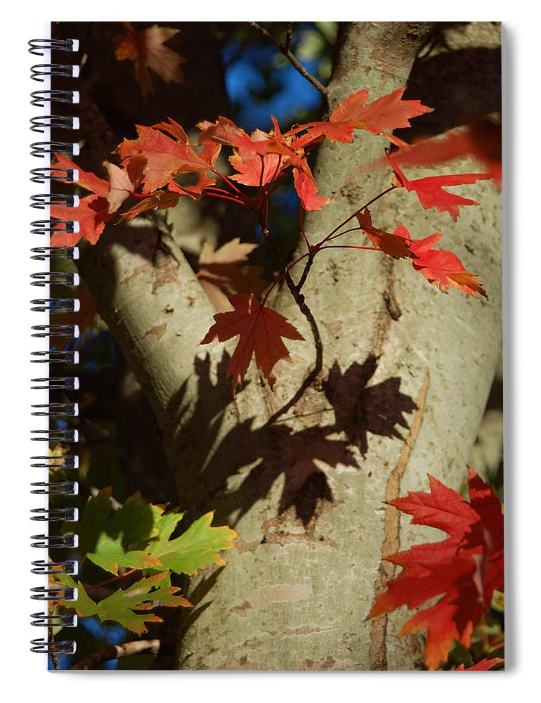 Autumn Spiral Notebook featuring the photograph Carolina Autumn by Suzanne Gaff