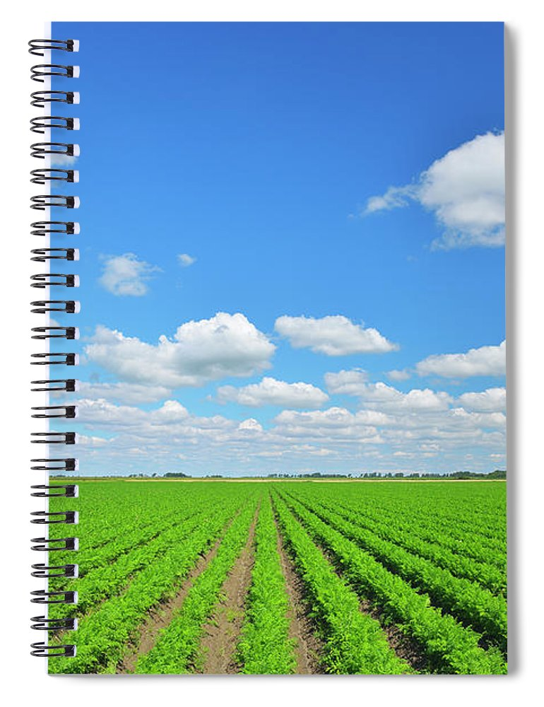 Tranquility Spiral Notebook featuring the photograph Carrot Field by Raimund Linke