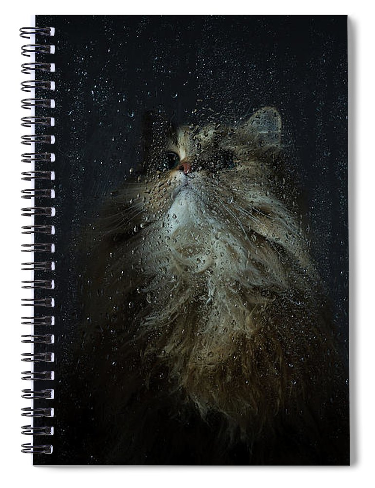 Pets Spiral Notebook featuring the photograph Cat By Rainy Window by Benjamin Torode