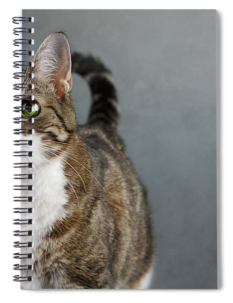 Cat Spiral Notebook featuring the photograph Cat Portrait by Nailia Schwarz