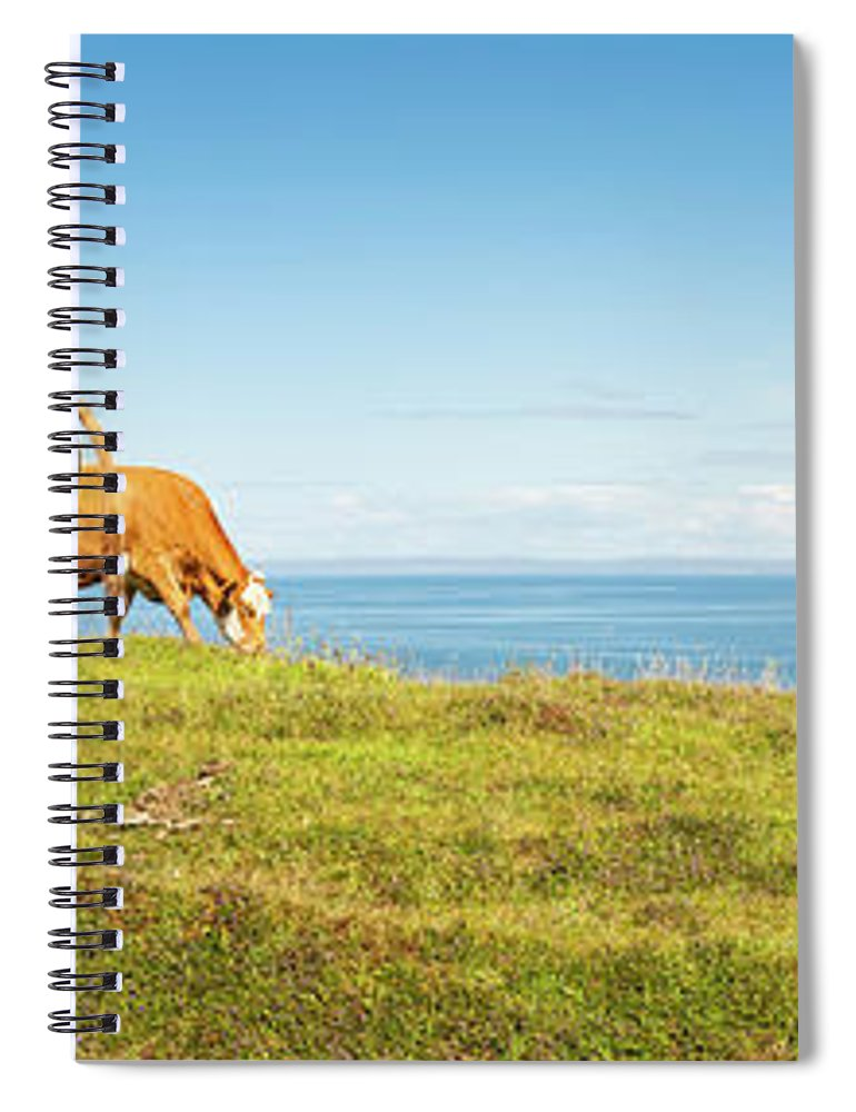Water's Edge Spiral Notebook featuring the photograph Cattle Grazing In Picturesque Meadow by Fotovoyager