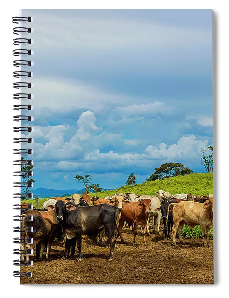 Grass Spiral Notebook featuring the photograph Cattle by Kcris Ramos