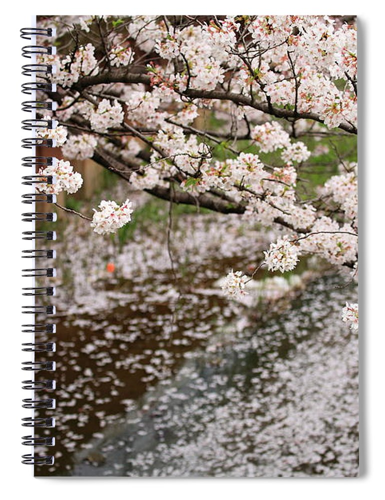 Season Spiral Notebook featuring the photograph Cherry Blossoms by Photography By Zhangxun
